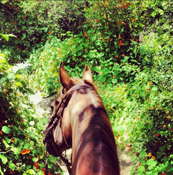 What is horse riding and how to handle it